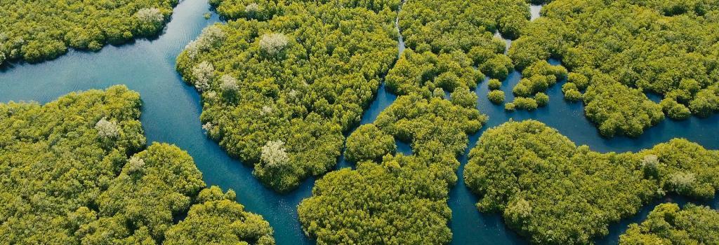 https://www.study24x7.com/article/607/mangrove-forest...